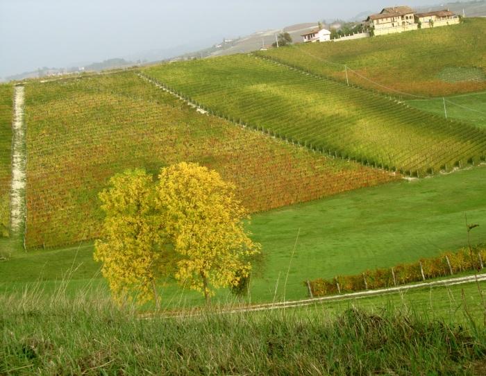 i colori d'autunno in Dogliani. ott 2012