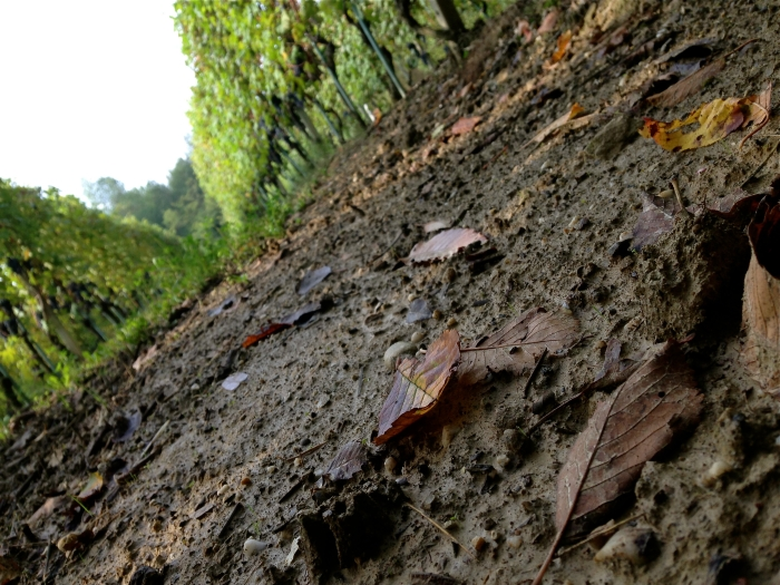 mud anyone? in Bricco delle Viole first week of October