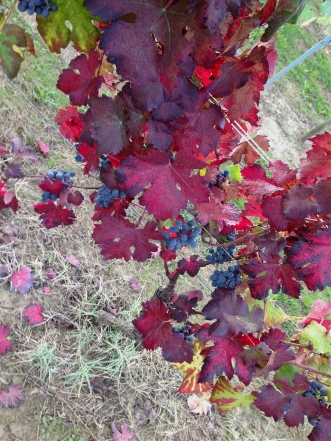 ...okay well most likely Dolcetto or Barbera. (Bricco delle Viole)