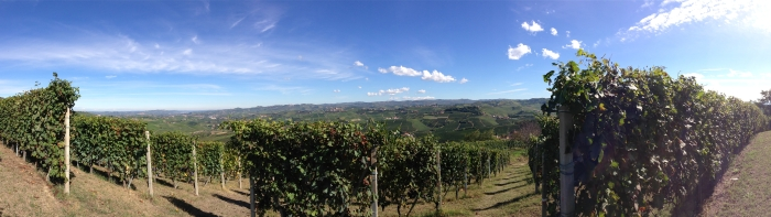 panorama of La Morra vineyards, Oct 10