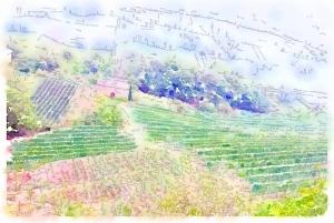 Fay vineyards