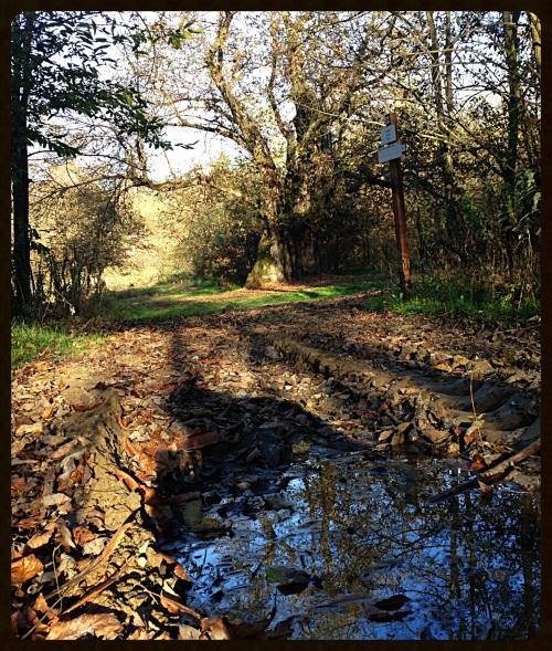 il sentiero all castagna