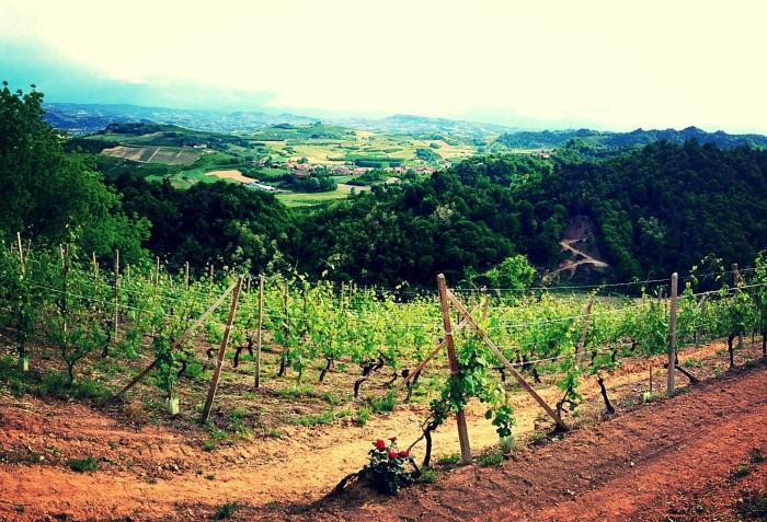 Valmaggiore Vineyard in Roero