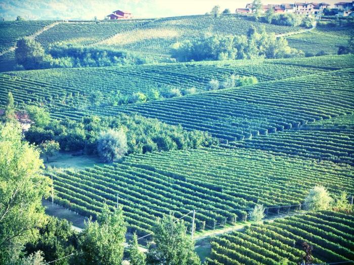 La Morra Vineyards