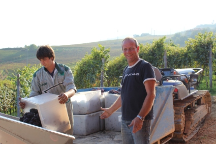 Harvest at Mauro Veglio with Mauro and Roberto, October 2014.