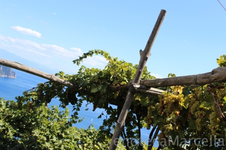 They've even got vines! ;)