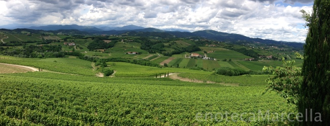 Livon Vineyards with Slovenia behind them and the Julian Alps in the background.