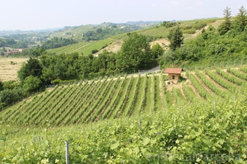 ... or Bricco Renesio in Italian. Pictured is one of Carbone's Arneis vineyards on this hill.