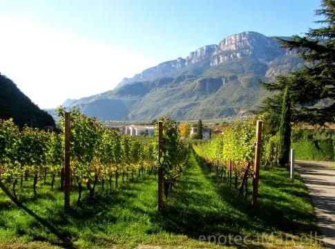 Cantina Terlano vineyards