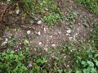 Topsoil at Manincor