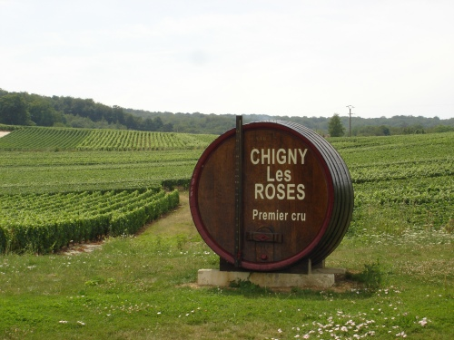 Chigny-les-Rose vineyards, thanks towww.lacaveduterroir.com