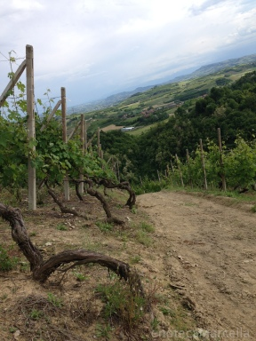 the Valmaggiore vineyard in Roero, Piemonte, Italy