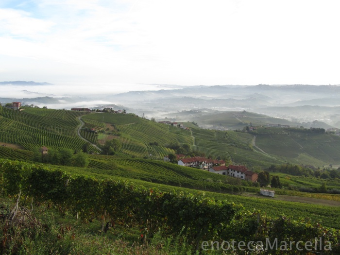 Barolo vineyards of La Morra, September 2012