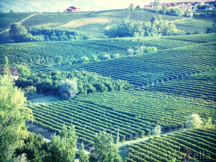La Morra Barolo vineyards Sep 2012